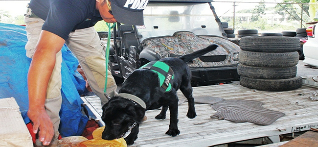DRUG WATCH. A narcotics agent with a highly trained dog helps in inspecting cargo at the port in Tagoloan, Misamis Oriental. The Philippine Drug Enforcement Agency (PDEA) has been tasked to be on the watch for illegal drugs in ports. (PHOTO BY LITO RULONA)