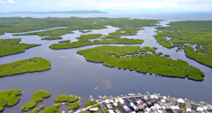 Siargao town recognized as best mangrove site in the Philippines